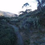 Flying fox track near Guthega service trail (137571)
