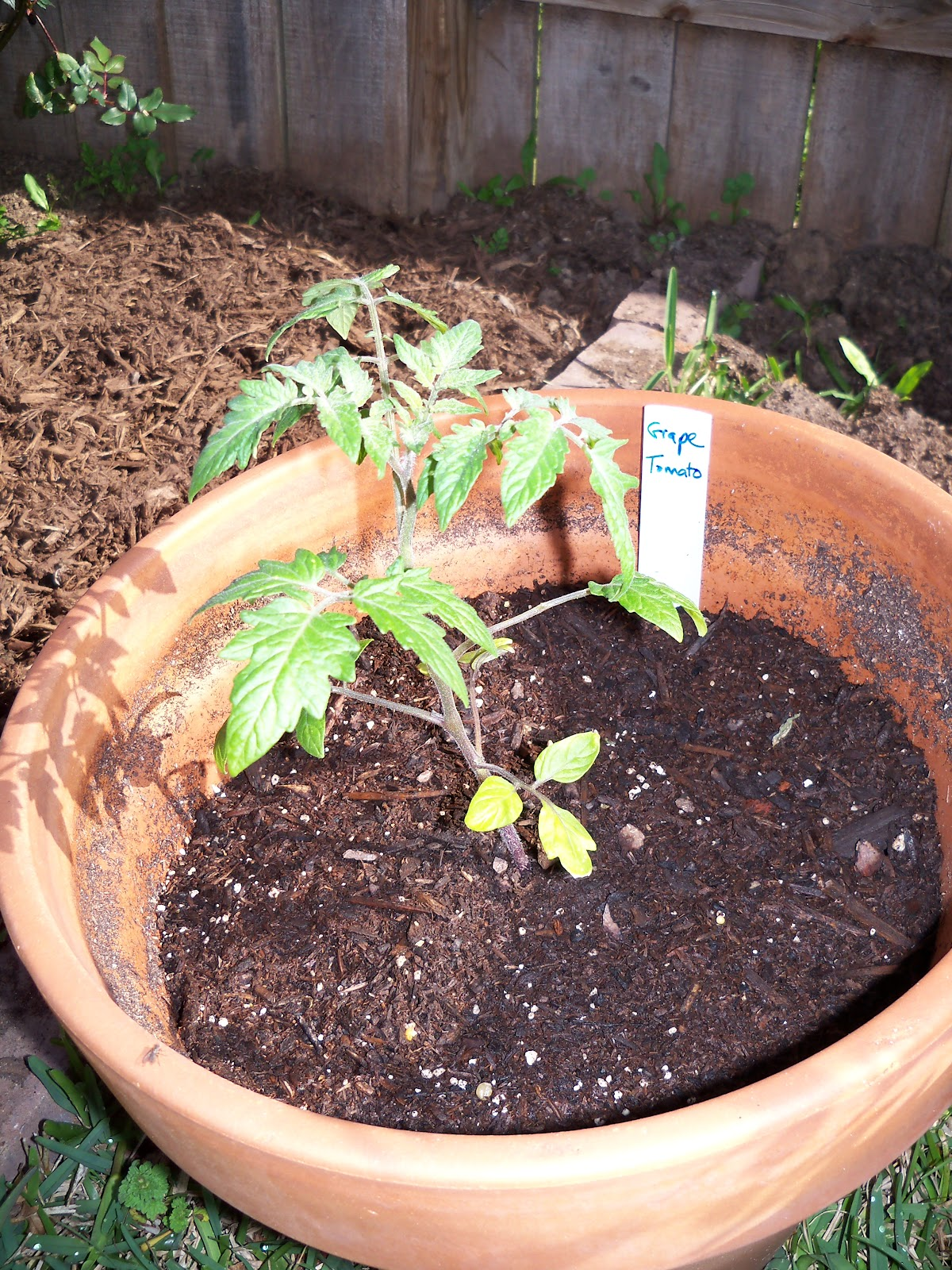 Gardening 2010 - 101_0237.JPG