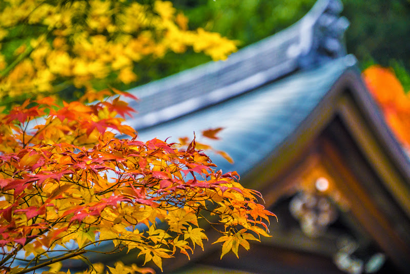 京都 紅葉 龍安寺 写真2