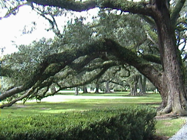 1010A_Southern_Mansion_Garden_-_New_Orleans