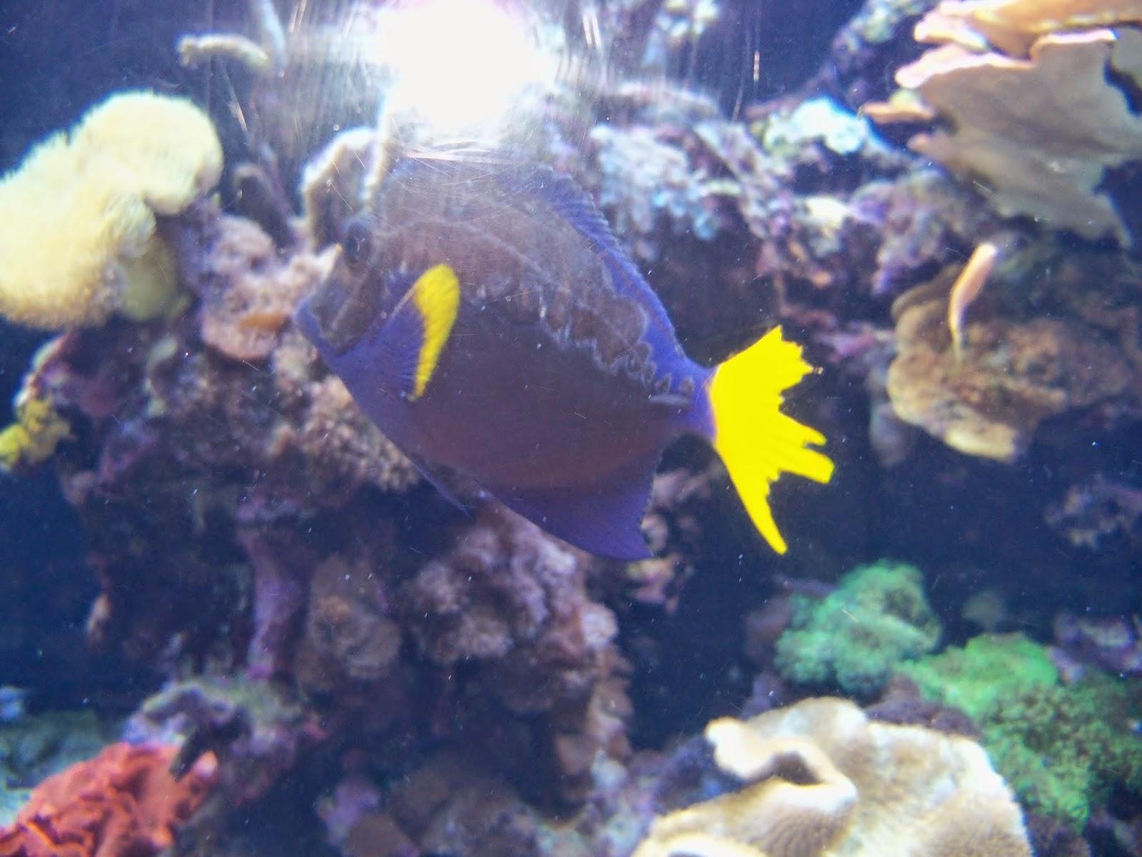 Downtown Aquarium - 116_3863.JPG