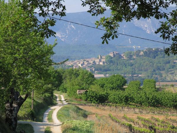 Photo number 35 of Les Vignes