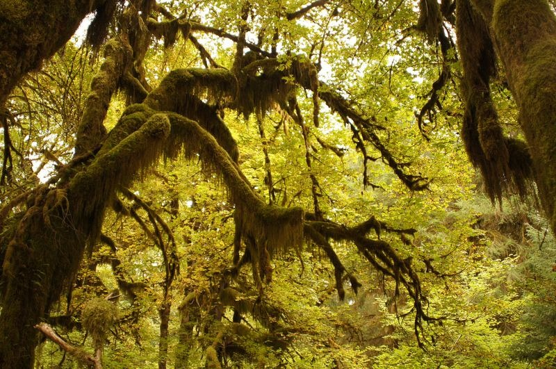 hall-of-mosses-9