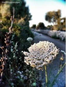 flores de Mallorca
