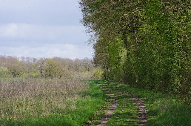 Les Hautes-Lisières (Rouvres, 28), 21 avril 2012. Photo : J.-M. Gayman