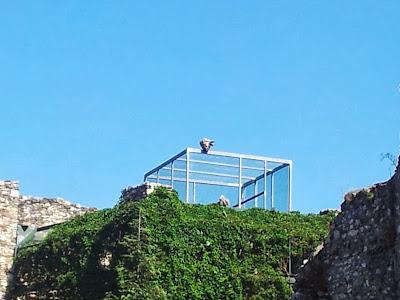 Greifvogelwarte auf der Burgruine