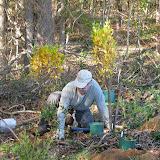 Guilford Salt Meadows Sanctuary Planting - IMG_7821.JPG