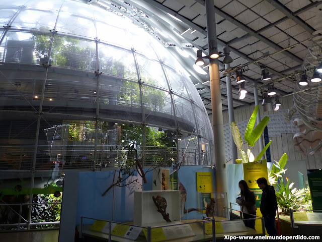 California-Academy-of-Sciences.JPG