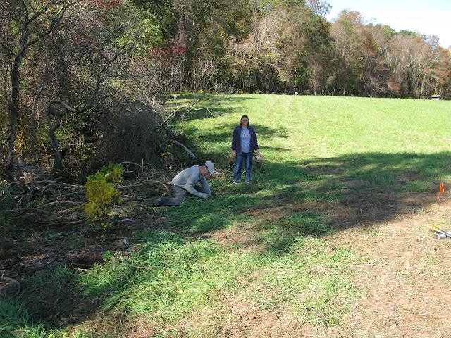 Guilford Salt Meadows Sanctuary Planting - IMG_7835.JPG