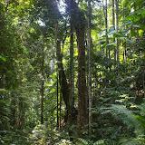 Forêt primaire près de Warkapi, Arfak, août 2007. Photo : J.-M. Gayman