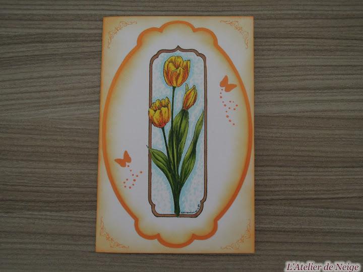 022 - Tulipes