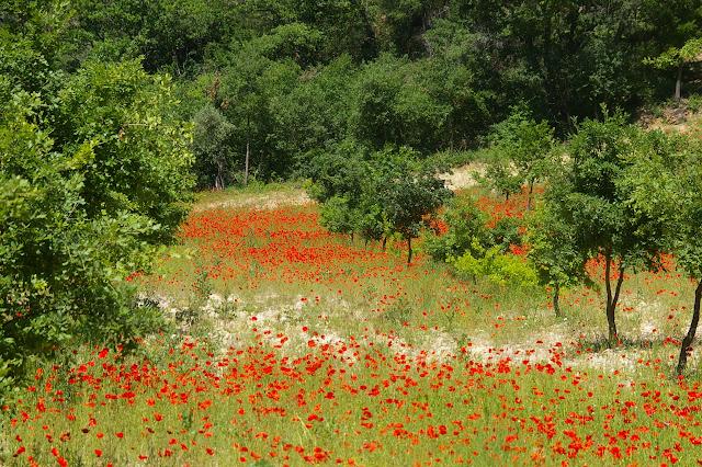 Brunet (Alpes-de-Haute-Provence), 12 juin 2008. Photo : J.-M. Gayman