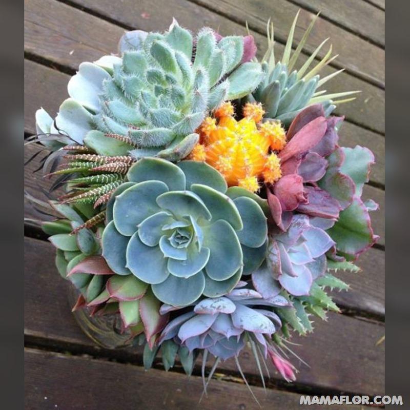 Centros-de-mesa-para-Boda-con-cactus-y-suculentas---12