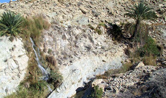 Die erste Palme auf 1100er Meter bei Shaldan, Ghir-Firuzabad-Road, Iran