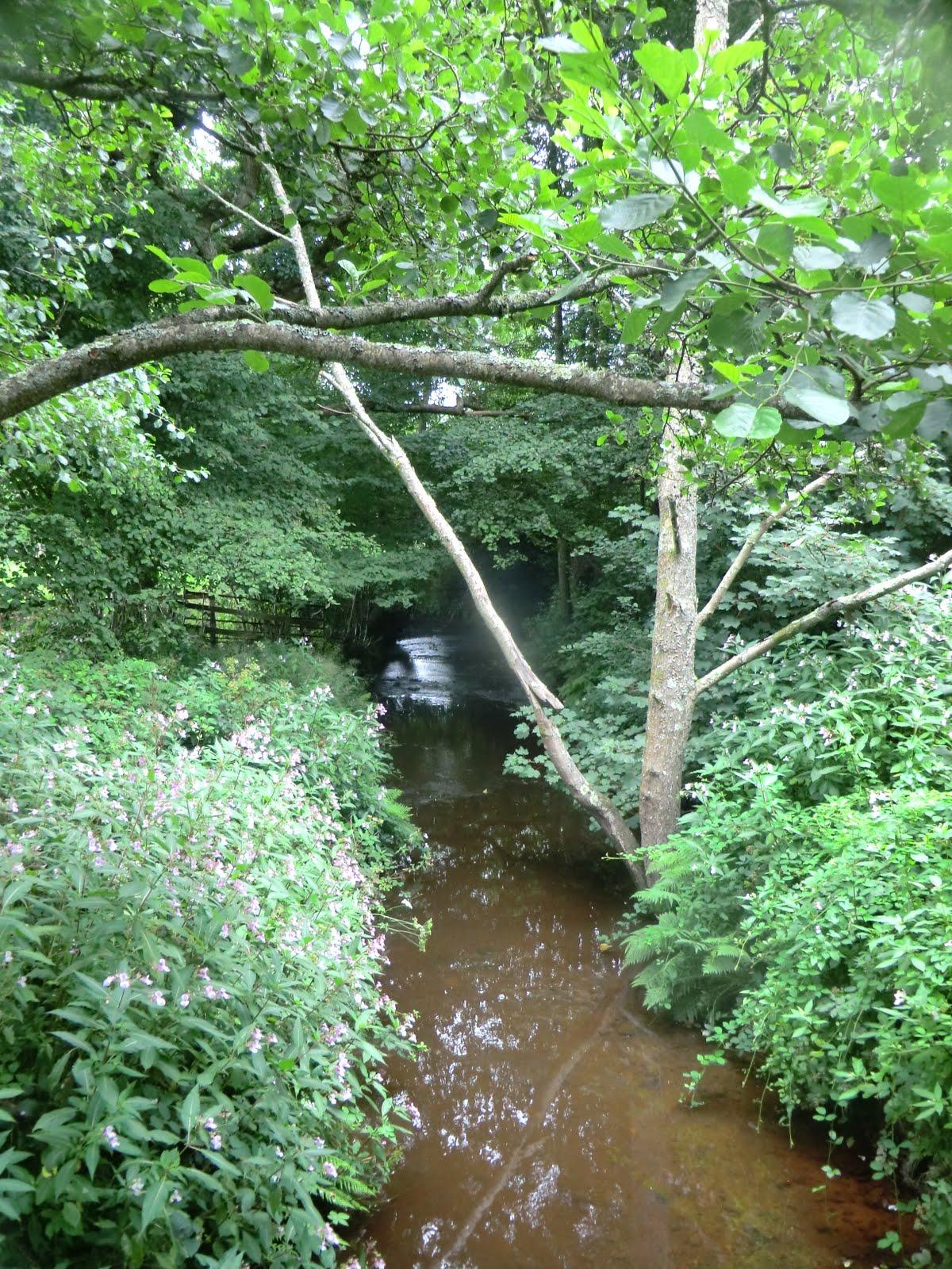 CIMG5926 Woodland stream at Marsh Green