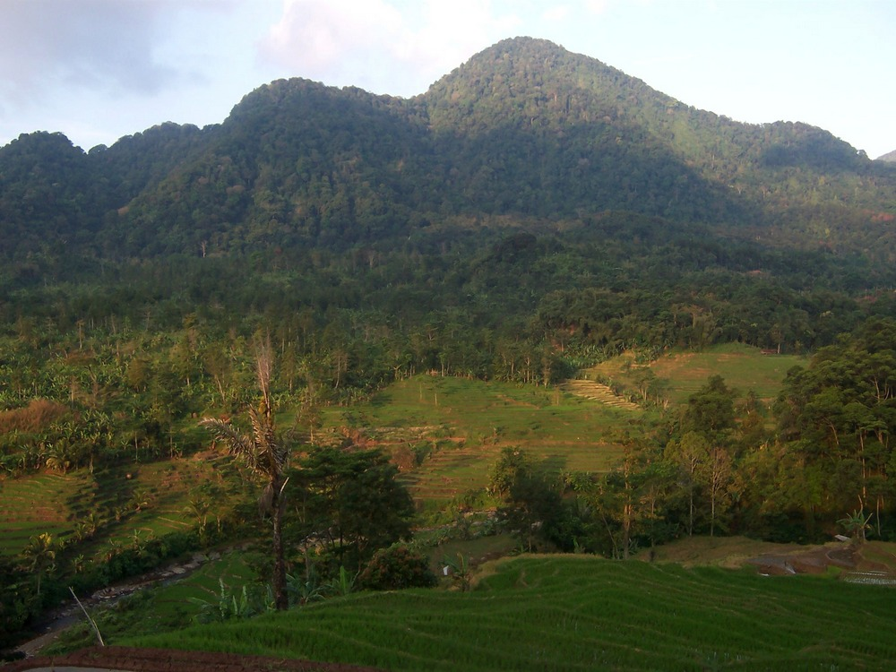 Keterlaluan! Oknum ASN Diduga Jual Hutan Lindung, Dijadikan Lokasi Penanaman Sawit