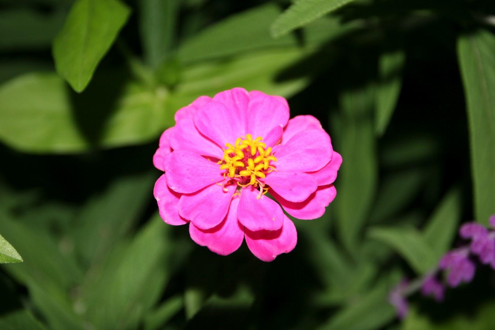 Gardening 2012 - IMG_3086.JPG
