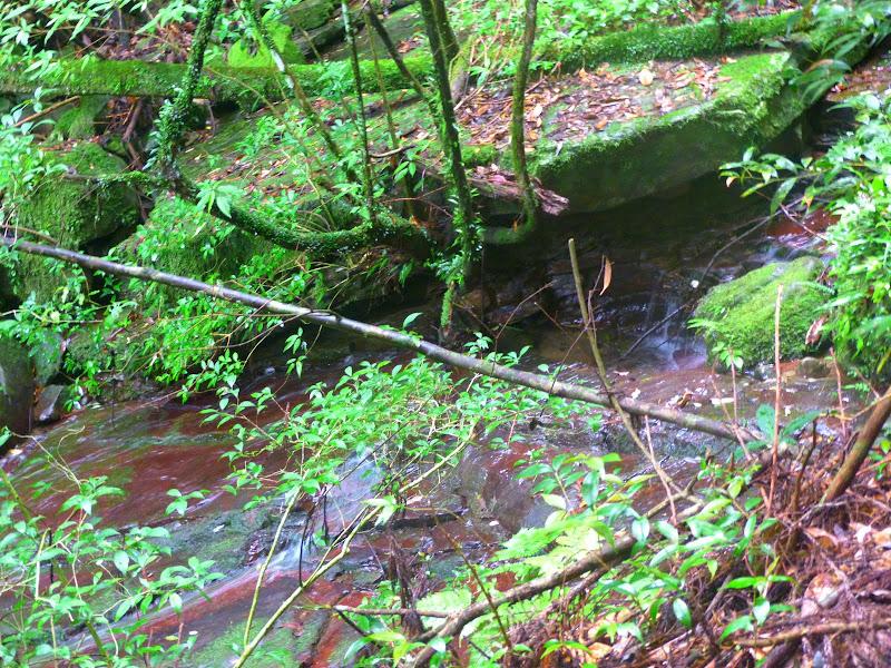 Petite randonnée au sud de Taufen, dans la région de Miaoli - P1330613.JPG