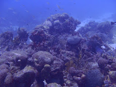 Our general view whilst diving on day 1