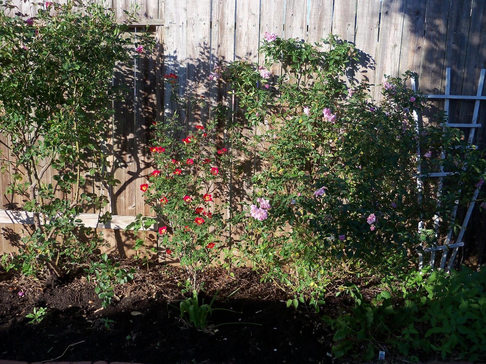 Gardening 2013 - 115_5367.JPG