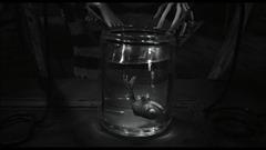 le poisson mort