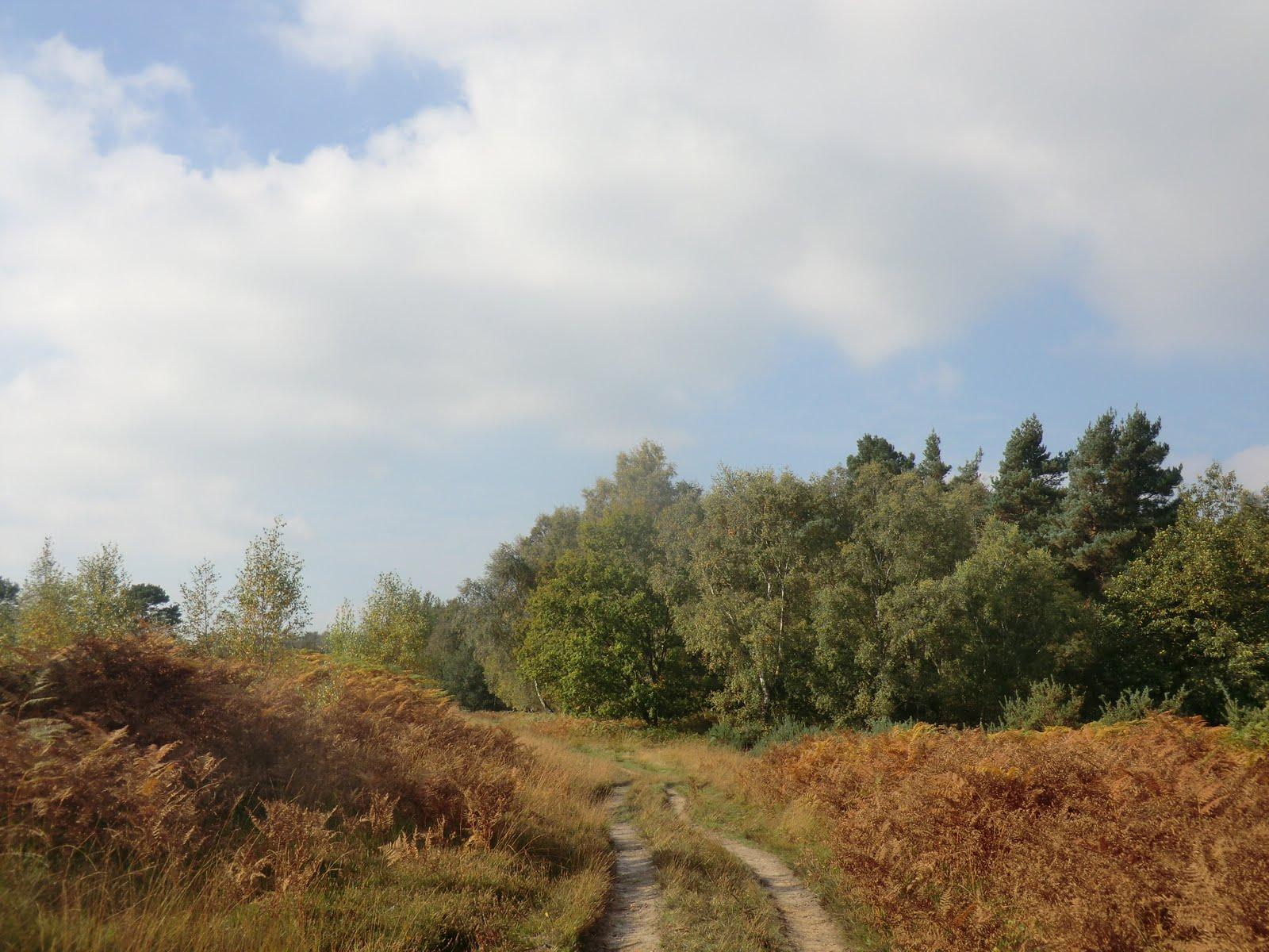 CIMG0822 Ashdown Forest