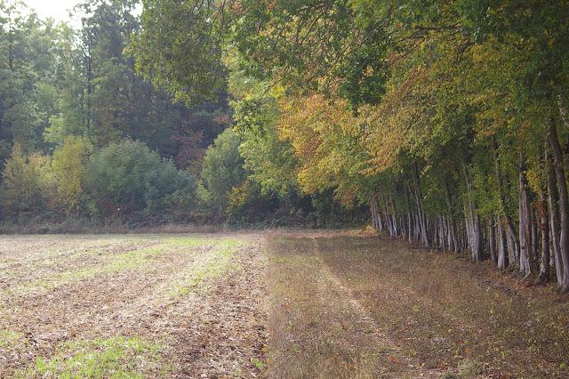 Lisière : champ et forêt. Les Hautes Lisières (Eure-et-Loir), 8 octobre 2009. Photo : J.-M. Gayman