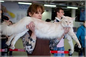 cats-show-24-03-2012-fife-spb-www.coonplanet.ru-098.jpg