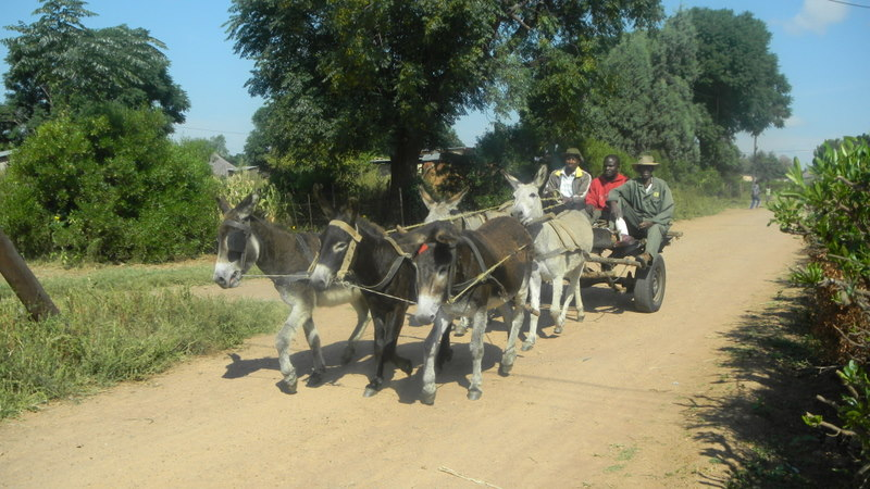 Donkey cart passing by in our neighborhood