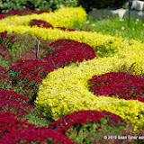 10-26-14 Dallas Arboretum - _IGP4306.JPG