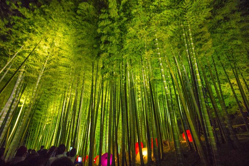 京都 高台寺 竹林 ライトアップ 写真1