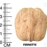 Фернет грецкий орех