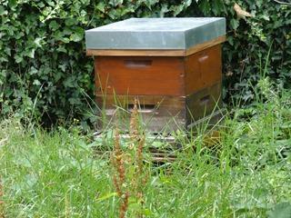 2016.08.05-005 ruche