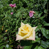 Gardening 2010, Part Three - 101_4520.JPG