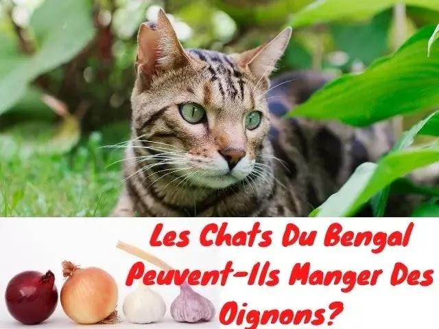 Les Chats Du Bengal Peuvent-Ils Manger Des Oignons?