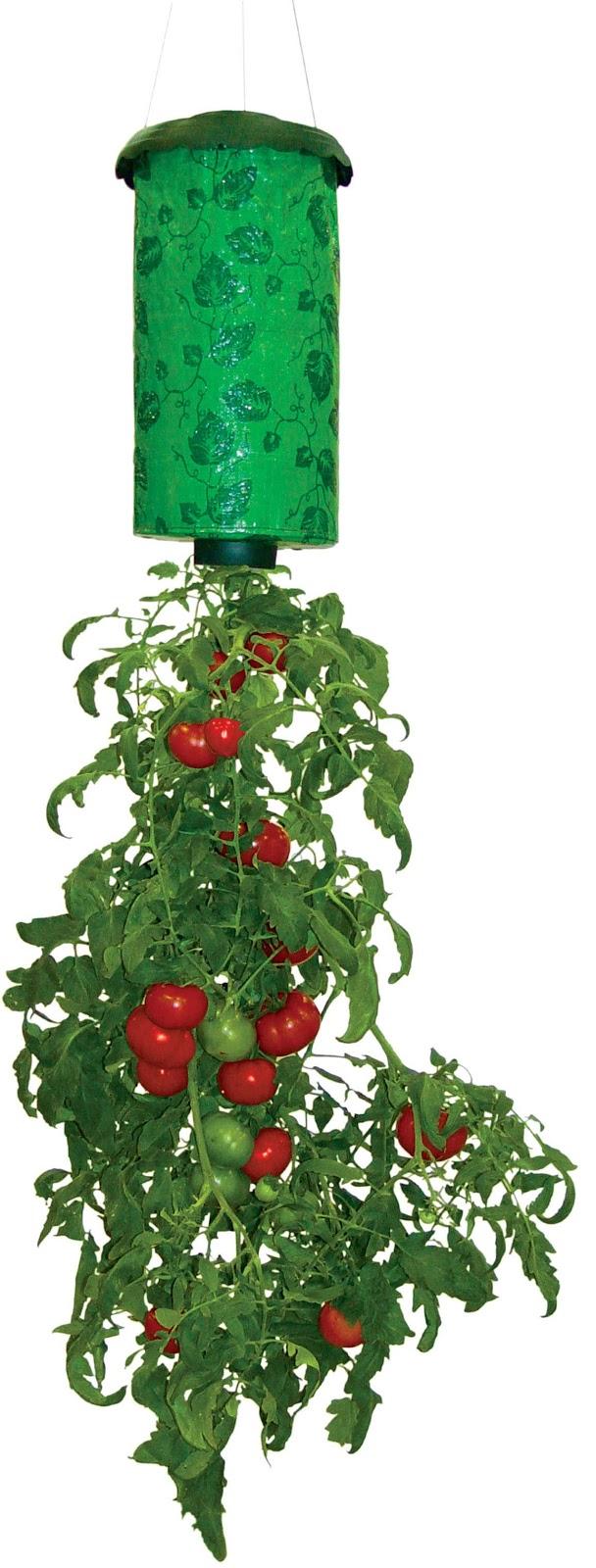 Upside Down Tomato Plants
