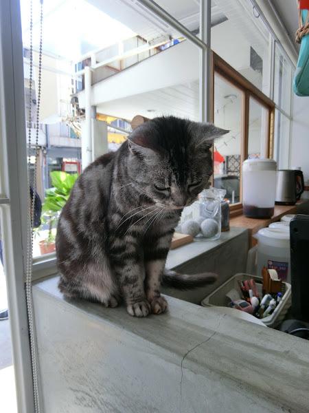 位子太少了,餐點好吃,但太貴了,吃不飽,貓咪也不親人