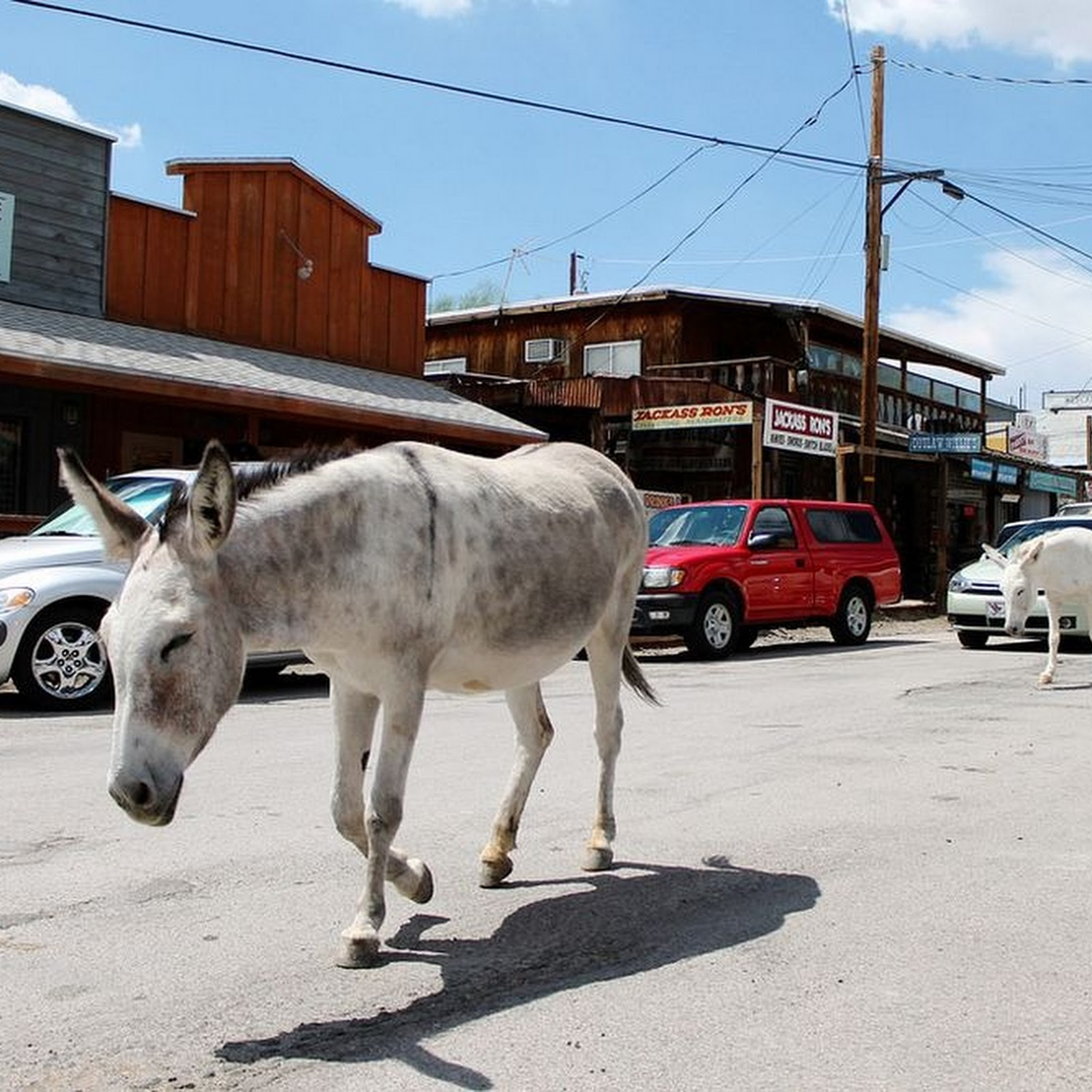 The Wild Burros of Oatman, Arizona