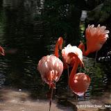 04-07-12 Homosassa Springs State Park - IMGP4553.JPG
