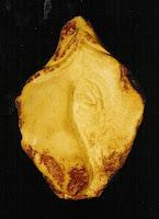 'Yoni', gelblich-beiger Speckstein, ca.25 cm, 2002