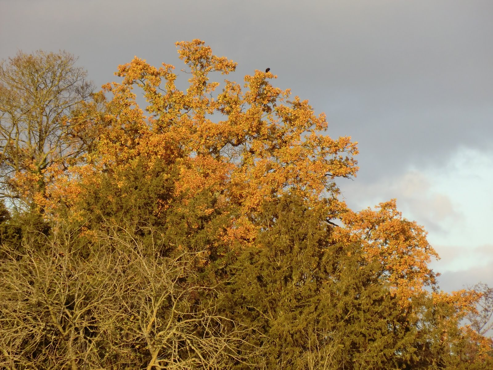 CIMG0850 Autumn colours by the River Mole