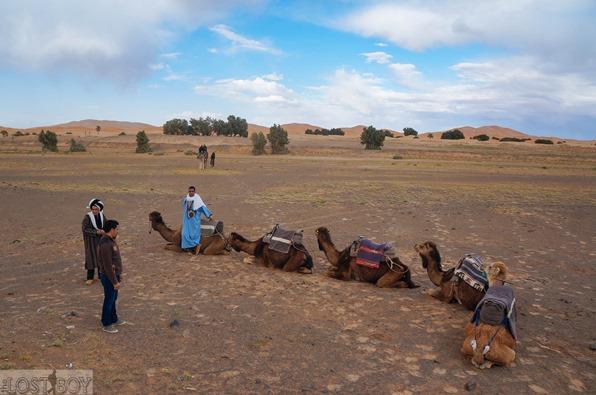 sahara desert-19