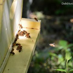 PLC Honey Fiesta 7/10/16 - i-bcWb4H5-X3.jpg