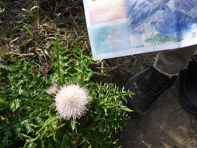 Fleur qui apparait sur les billets de banque de Taiwan NT Dollars