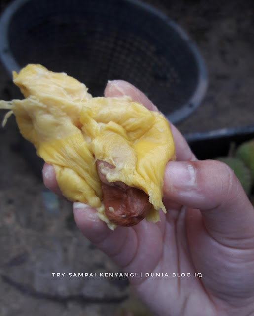 Durian Beri Angin Dalam Perut?