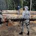 Governo autoriza Forças Armadas a combater desmatamento em Mato Grosso