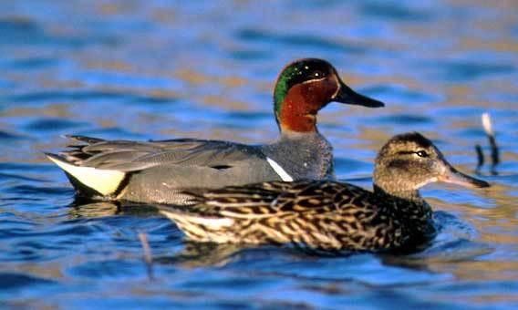 [bayoffundy.ca-SEABIRDS-40-Good-reaso%5B99%5D]