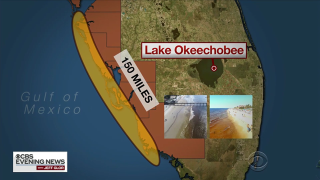 Map showing the extent of a toxic algae bloom, or 'red tide', spanning 150 miles on the southwest coast of Florida, 2 August 2018. Graphic: CBS Evening News
