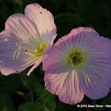 2013 Spring Flora & Fauna - IMGP6335.JPG