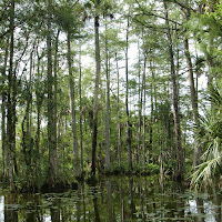 Seabase 2012 - 2012%7E07%7E25 9 Swamp 3.jpg